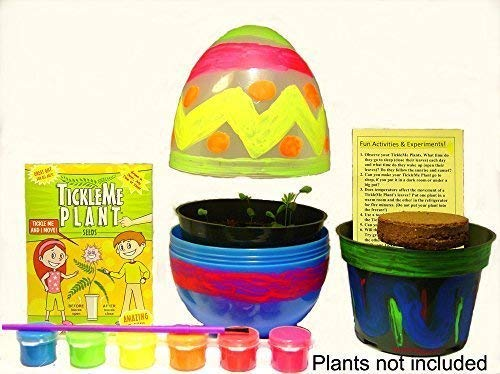 TickleMe Plant Easter Egg Terrarium with Paint Set! Paint This Large 6 inch Egg and Grow The Plants Inside. The Leaves Close up When Tickled. It can Produce Sparkling Pink Flowers! #TickleMePlant